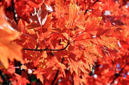 Autumn - Fall in America